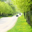 Spring road — Stock Photo #7645689