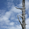 Branches in the sky - Stock Photo