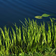 Spring grass — Stock Photo #7647603