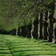 Stock Photo: Green path