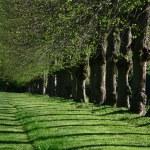 Green path — Stock Photo #7647609