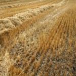 oogst — Stockfoto