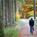 Autumn forest — Stock Photo #7647825