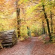 Autumn forest - Photo