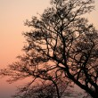 Branches morning - Stock Photo