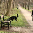 Walking the dog — Stock Photo #7648359