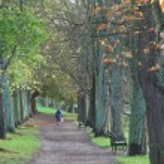 Green path — Stock Photo #7648383