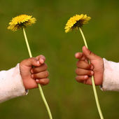 Dandelion child — Stock Photo