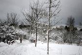 Dänische winter — Stockfoto