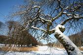 Invierno cubierto de nieve — Foto de Stock