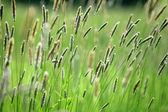 Herb — Photo