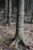 Ağaç gövdesi — Stok fotoğraf