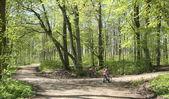 Ciclistas de bosque verde — Foto de Stock