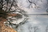 Trees & lake — Stockfoto