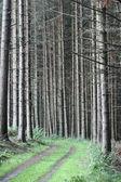 Green spring landscape in denmark — Stockfoto