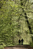 Trees and forest — Stock Photo