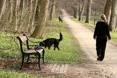 Walking the dog — Stock Photo