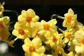 Flower closeup — Stock Photo