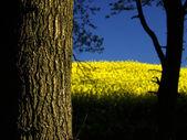 Yellow — Stock Photo