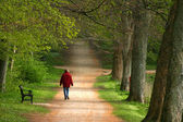 Trees in a park — Stock Photo