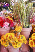 Flower Market 1 — Stock Photo