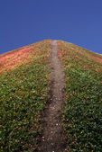 Dirt Path Up a Hill — Stock Photo