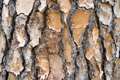 Pine Bark Background Landscape — Stock Photo