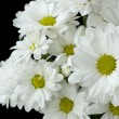 Stock Photo: White flowers on black background