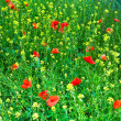 Beautiful wild flowers in the meadow — Stock Photo