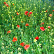 Beautiful wild flowers in the meadow — Stock Photo #6759387