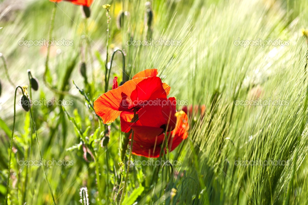 Beautiful colorful meadow with flowers in detail — Stock Photo #6824761