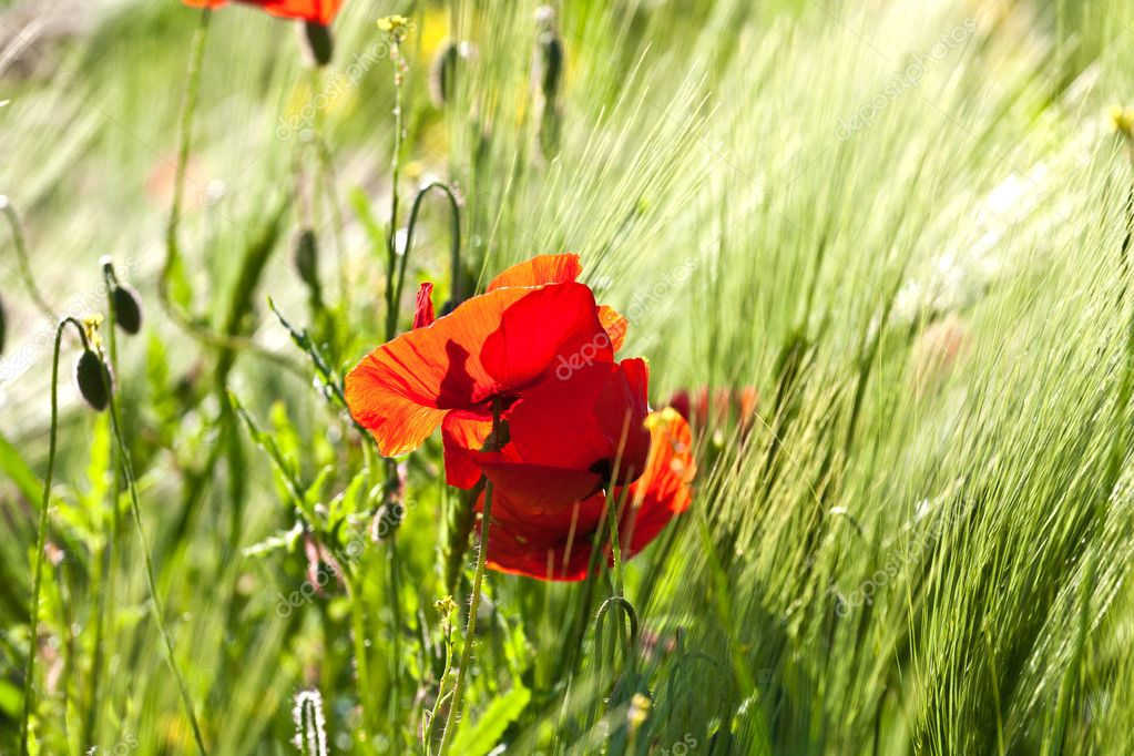 Beautiful colorful meadow with flowers in detail — Foto de Stock   #6824761
