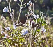 Piękny kolorowy łąka z kwiatami — Zdjęcie stockowe