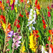 Beautiful flowers in the meadow - Stockfoto