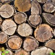 Woodpile (round) — Stock Photo