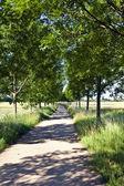 Gasse mit bäumen im frühjahr — Stockfoto