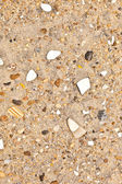 Shells and stones at the beach — Stock Photo