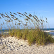 Stock Photo: Dunes at the beautiful beach in Sankt Augustine
