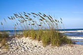 Dunes at the beautiful beach in Sankt Augustine — Stock Photo