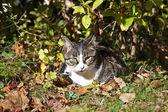 Cute kitten lying in the garden — Stock Photo
