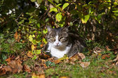 Cute kitten lying in the garden — Stock Photo