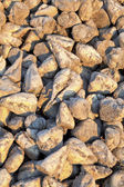 Detail of sugar beets on a farm — Stock Photo