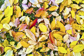Foliage in indian summer colors — Stock Photo