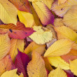 Autumn leaves lying in the faded foliage — Stockfoto
