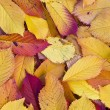 Autumn leaves lying in the faded foliage — Stock Photo #7510338
