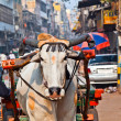 Ox cart transportation on early morning in Delhi, India — Stock Photo #7753801