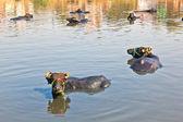 Kuh hat eine pause in den see des dorfes — Stockfoto