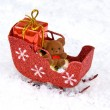 Teddy's holiday sleigh — Stock Photo #7451677
