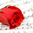 Music rose - Stock Photo