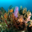 Coral reef — Stock Photo #7452030